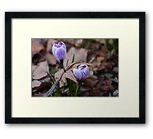 The Force of Spring Framed Print