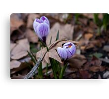 The Force of Spring Canvas Print