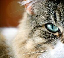 My Cats Eye by anna mark
