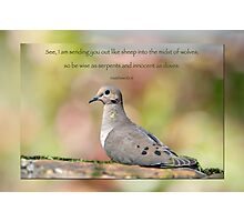 Be wise as serpents and innocent as doves . . . Photographic Print