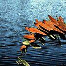 Nature's Melody by Rosalie Scanlon