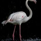 ~ Flamingo ~ by Lisa  Kenny