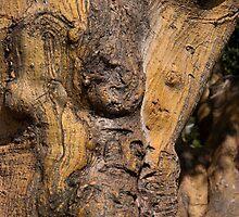 Gnarly Wood! by Dorinda