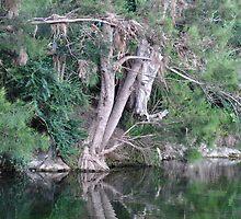 Where the Peel River Runs - Nundle NSW Australia by Bev Woodman