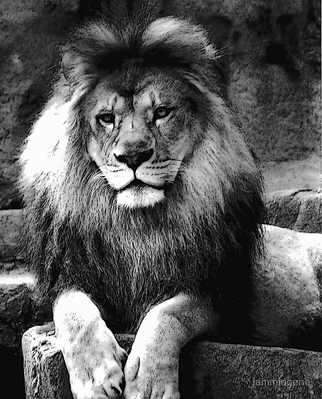 Lion In Black And White Posters By Jammingene Redbubble