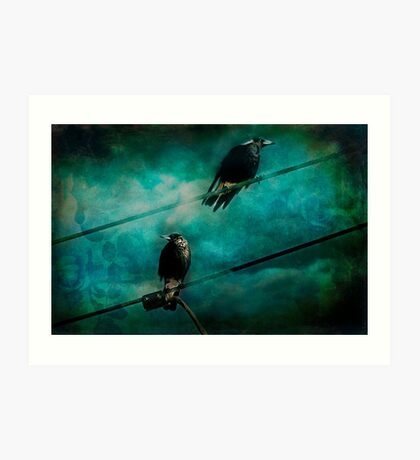 Magpies Art Print