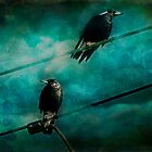 Magpies by © Helen Chierego
