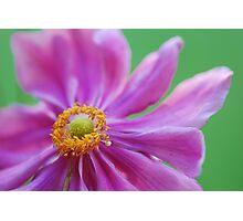 wildflower Photographic Print