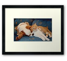 cat and dog Framed Print
