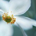 light white by Tamara Cornell