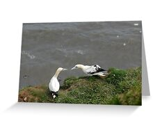 Gannets chatting Greeting Card