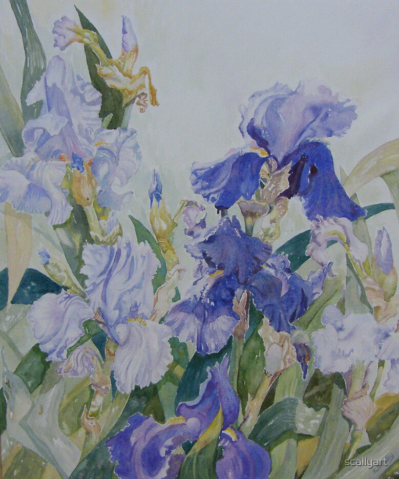Blue Iris by scallyart