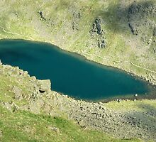 Goats Water From Above by Jamie  Green