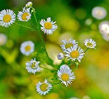 Flowers 2 by ScottPhotos