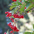 Red berries by Elena Skvortsova