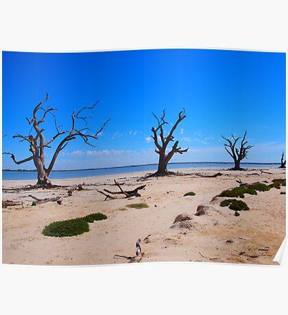Shores of Lake Bonney Poster