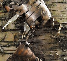 Birch Bark Curl by Tracy Faught
