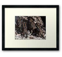 wild boar baby behinds Framed Print