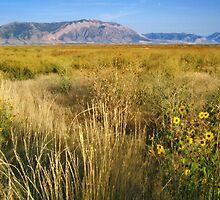 Golden Fields of Bear River Utah by Bellavista2