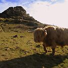 Dartmoor: On The Moooove at Brentor Church by Rob Parsons