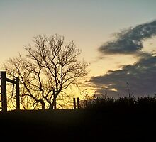 Harvest Sunset TREE on the Hill by Diane Trummer Sullivan