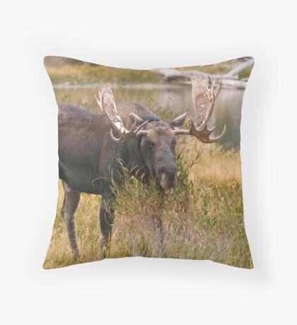 Bull Moose II Throw Pillow