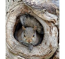 The Agency Finally Sent Over A Squirrel I Could Work With Photographic Print