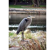 Heron There Photographic Print
