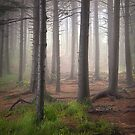 Trees and Fog - Enchanted Forest on Black Balsam by Dave Allen