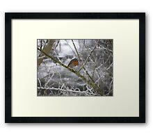 Robin and Winter Scene Framed Print