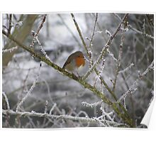 Robin and Winter Scene Poster