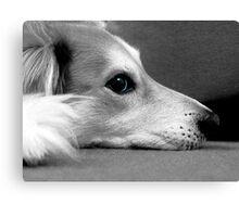 saz black and white blue eyes Canvas Print