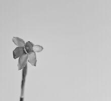 Flower by Daniel1977
