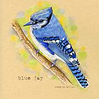 Blue Jay in colored pencil by Revelle Taillon