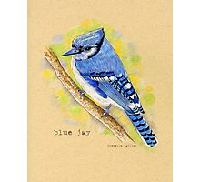 Blue Jay in colored pencil Photographic Print