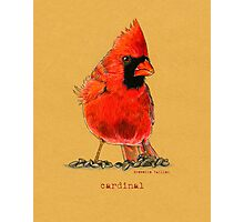 Cardinal in colored pencil  Photographic Print