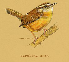Carolina Wren Bird by Revelle Taillon