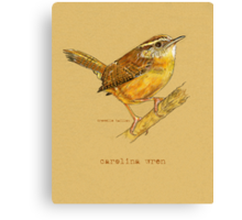 Carolina Wren Bird Canvas Print