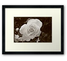 Morning Flowers  Framed Print