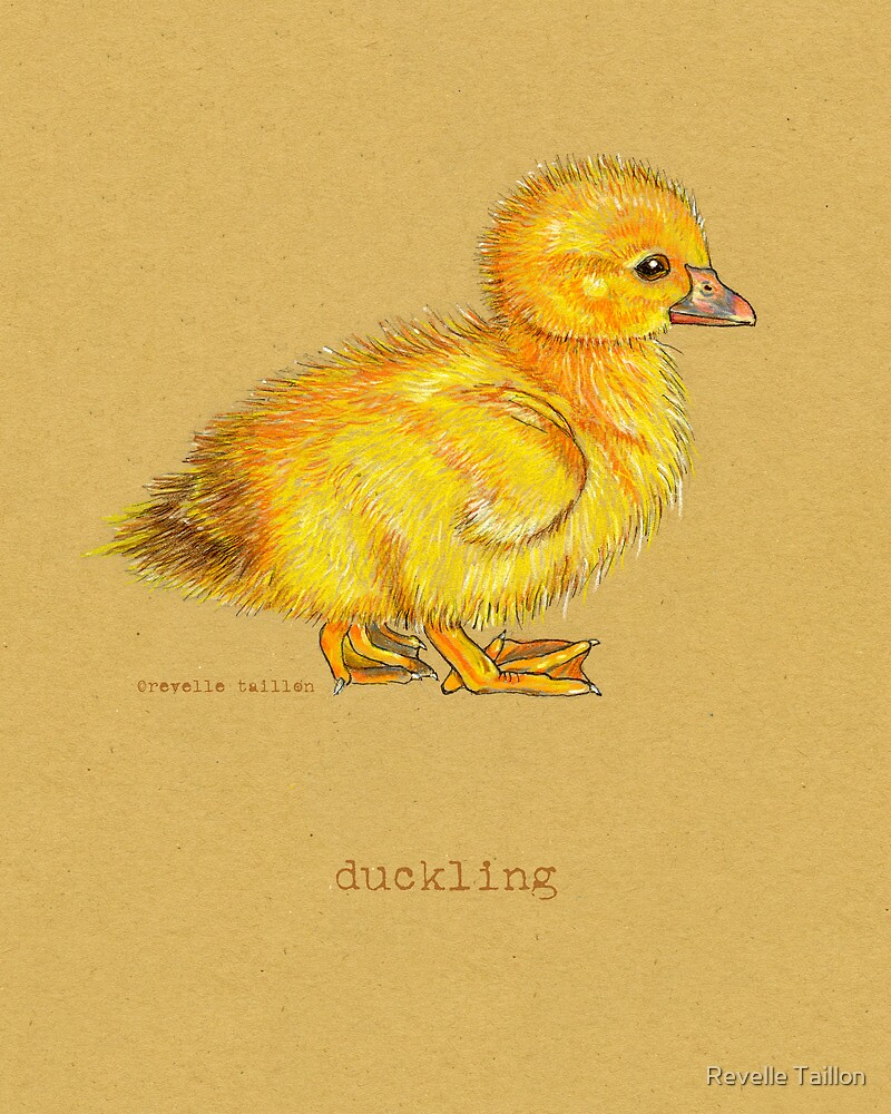 Duckling, Duck, in colored pencil and pen and ink by Revelle Taillon