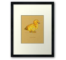 Duckling, Duck, in colored pencil and pen and ink Framed Print