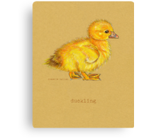 Duckling, Duck, in colored pencil and pen and ink Canvas Print