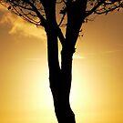 tree of light by satterflOw
