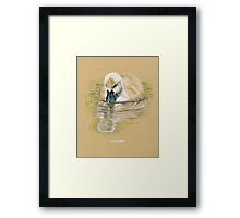 Cygnet, Baby Swan, in colored pencil and pen and ink Framed Print