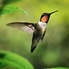 Ruby Throated Hummingbird in Flight by Dave Allen