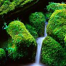 Mossy Cascade by Inge Johnsson