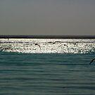 Free horizon by Anitavr