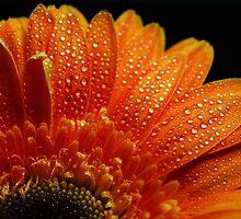 Orange Pearls by Ingz