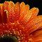 Droplets of orange