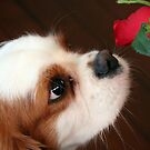 sniffing the rose by footsiephoto